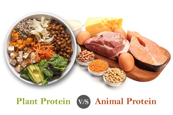 1200 Calorie High Protein Low Carb Diet Menu
